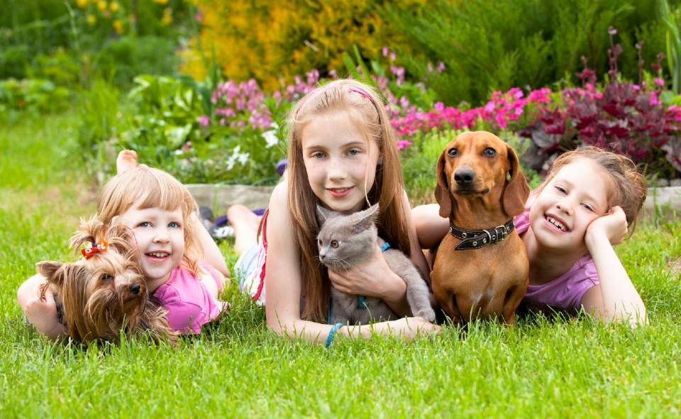 Pets and baby | Laval Families Magazine | Laval's Family Life Magazine